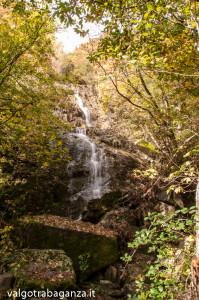 Foliage (118) cascate