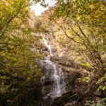 Foliage (122) cascate
