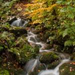Foliage Ruscello (117) Rio Biselle