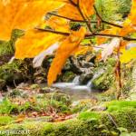 Foliage Ruscello (155) Rio Biselle