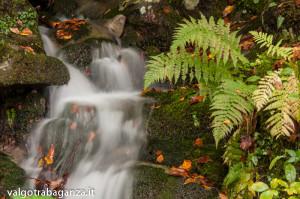 Foliage Ruscello (166) Rio Biselle