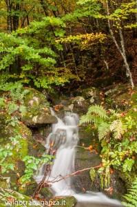 Foliage Ruscello (170) Rio Biselle