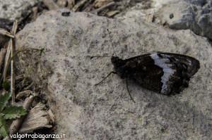 La pietra e la farfalla (102) fotofavolaracconto