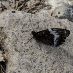 La pietra e la farfalla (103) fotofavolaracconto