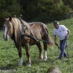 Riserva Ghirardi Oasi WWF (229)