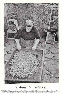 Castagne, Castagnaccio (103)
