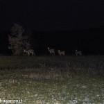 Cervi al pascolo (i100) notturno (23)