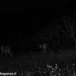 Cervi al pascolo (i100) notturno (31)