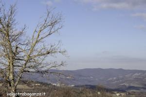 Fringuello (100) ramo