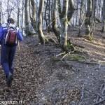 Monte Gottero (142) foresta