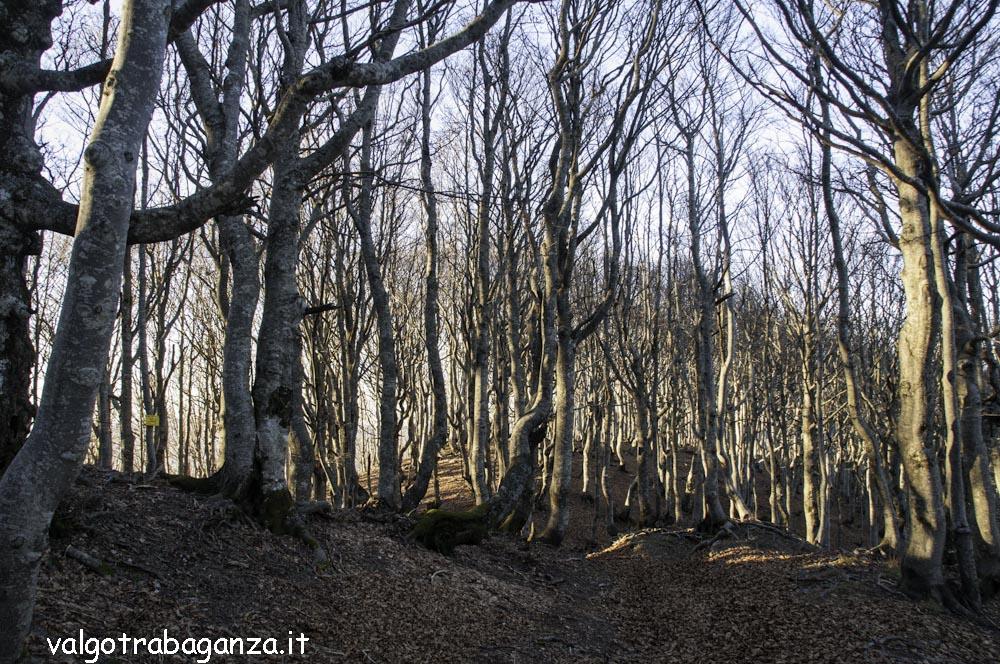 Monte Gottero (143) foresta