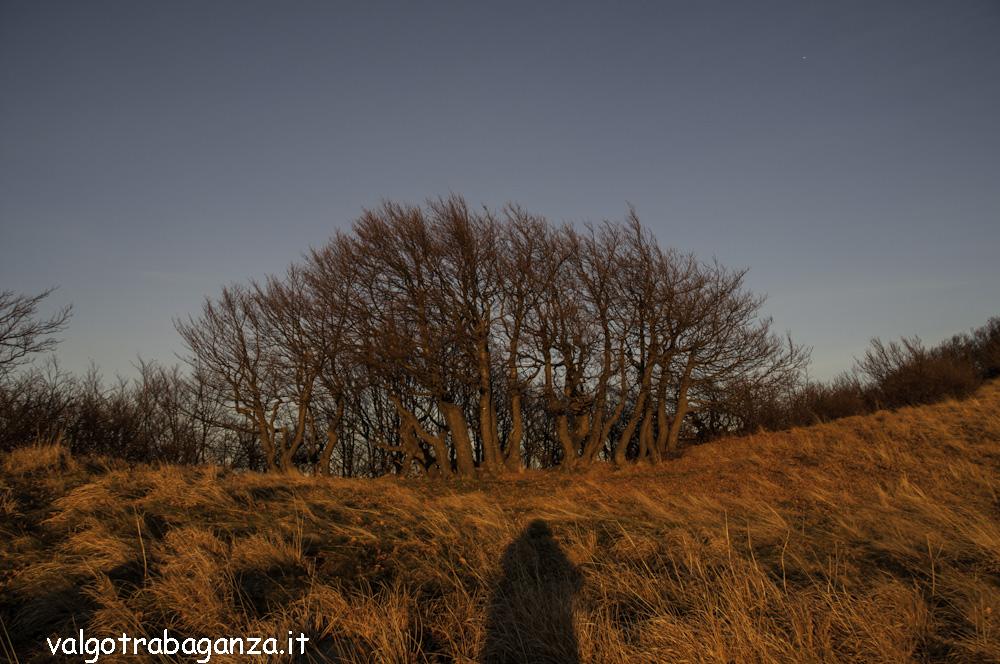 Monte Gottero (253) tramonto crinale