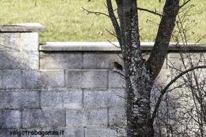 Pettirosso (116) ramo