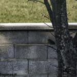 Pettirosso (121) ramo