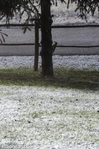 Picchio (136) neve