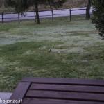 Picchio verde (136) nella rugiada