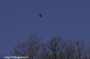 Poiana (103) volo
