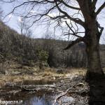 Albareto (152) bosco
