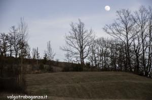 Caprioli  pascolo (100) Luna
