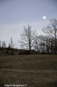 Caprioli  pascolo (101) Luna