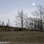 Caprioli  pascolo (106) Albareto