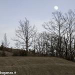 Caprioli  pascolo (111) luna