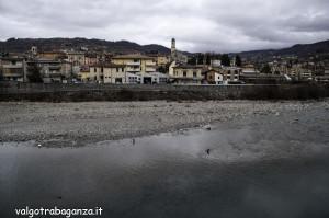 Cormorano comune (117) Borgotaro