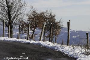 Pettirosso (101) sul palo