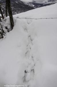 inverno Albareto (217) neve