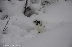 inverno Albareto (289) neve