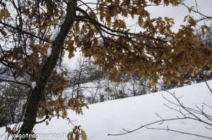 inverno Albareto (305) neve