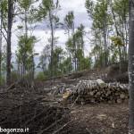 istanze taglio boschi  Regione Emilia Romagna