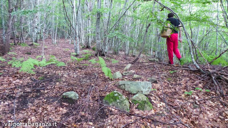 Comuni Valli Taro e Ceno (108) Raccolta in esclusiva dei funghi