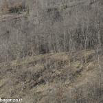 Cervo (100s) scompare  bosco (2)