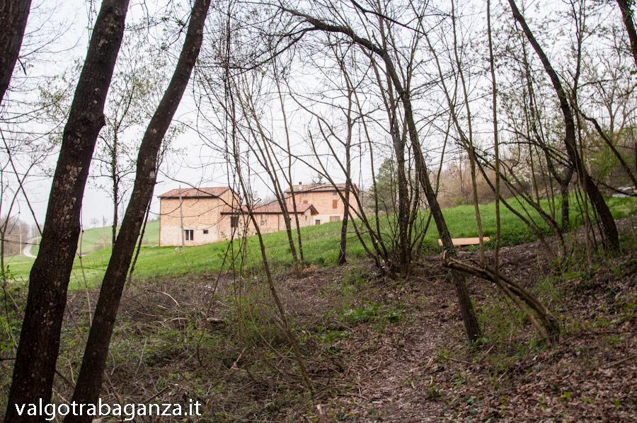 Flavio Nespi (218) Installazione Bosco