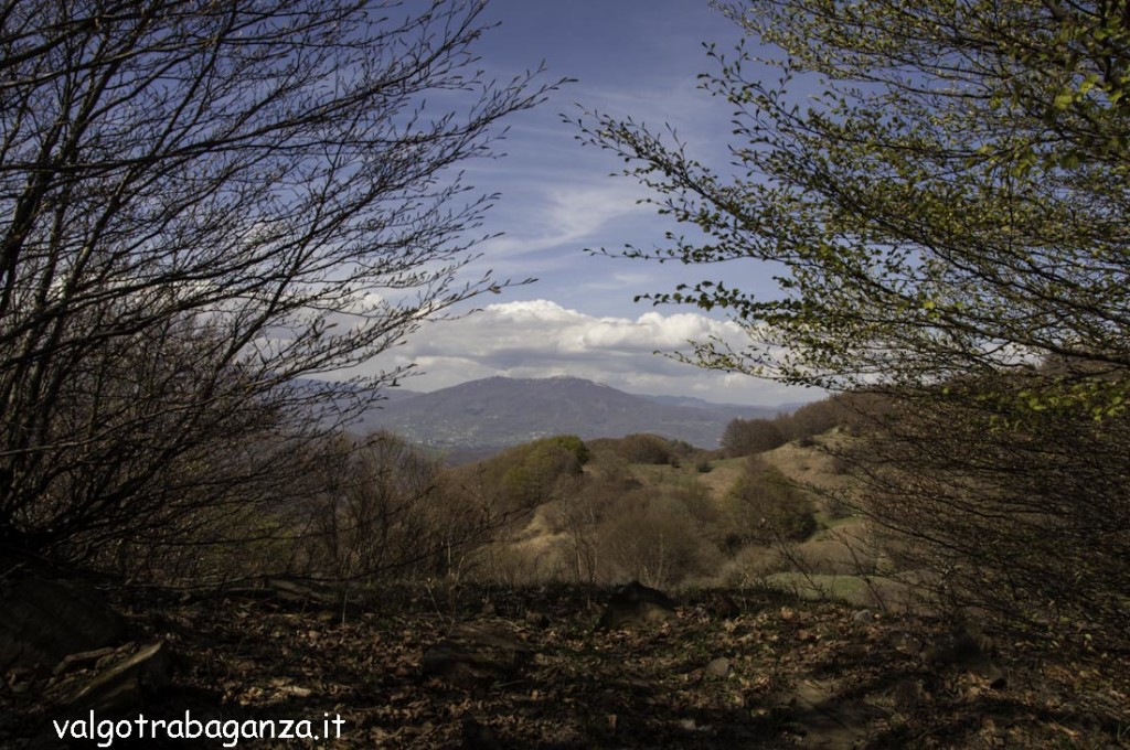 Passeggiata (156) natura