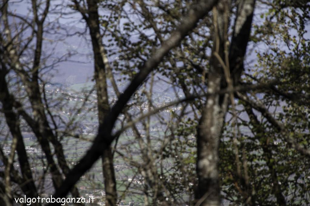 Passeggiata (244) bosco
