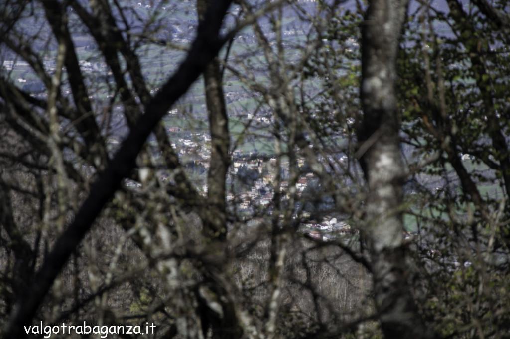 Passeggiata (245) bosco