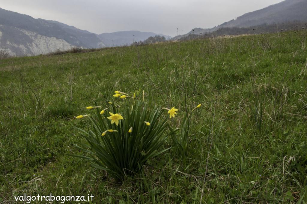 Val Baganza (127) Prato delle Volpi