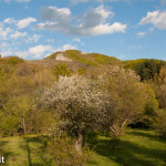 Belforte (113) Concarella