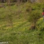 Belforte (231) fioriture
