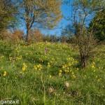 Belforte (234) fioriture