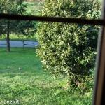 Picchio verde (100) nel giardino