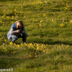 Primula odorosa (107) Primula veris