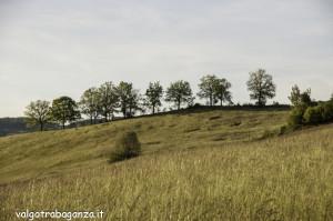 Quadrifoglio Ultratrail (130) Borgo Val di Taro