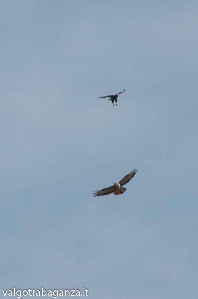 Rapaci (108) volo zampe penzolanti