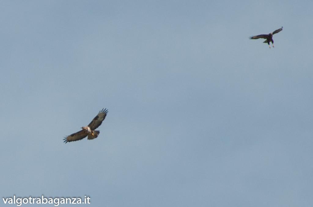 Rapaci (110) volo zampe penzolanti