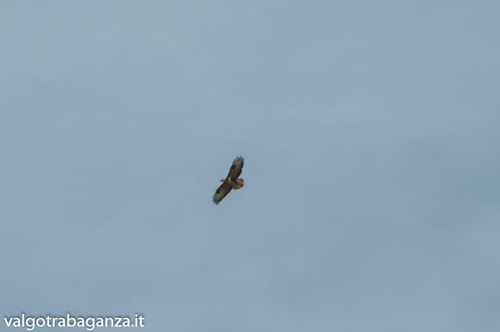 Rapaci (112) in volo