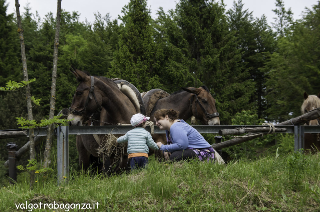 Pianazze (102) Fiera Agricola