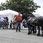 Pianazze (175) Fiera Agricola